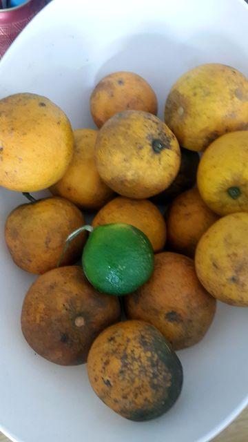 Orange bio_02