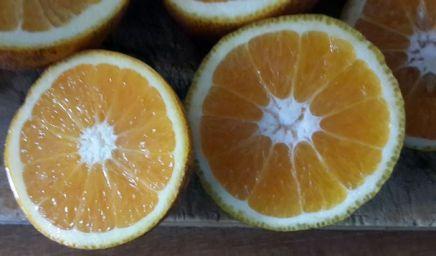 Orange bio_05